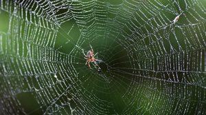 วิธีไล่แมงมุม สูตรปลอดสารเคมีด้วยเปลือกส้ม
