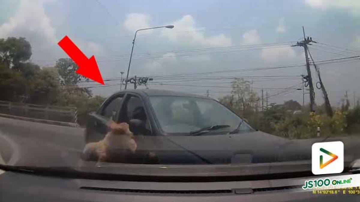 ถ้าจำเป็นต้องนำสุนัขเดินทางไปด้วย  ใส่กรงเอาไว้ดีกว่านะ เกิดอุบัติเหตุแล้วไม่คุ้มเลย