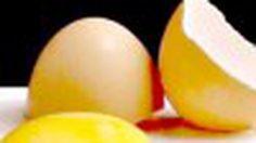 ไข่ไก่สด ตราซีพี โอเมก้า พลัส สิ่งดีๆ ที่เริ่มต้นได้ทุกวัน