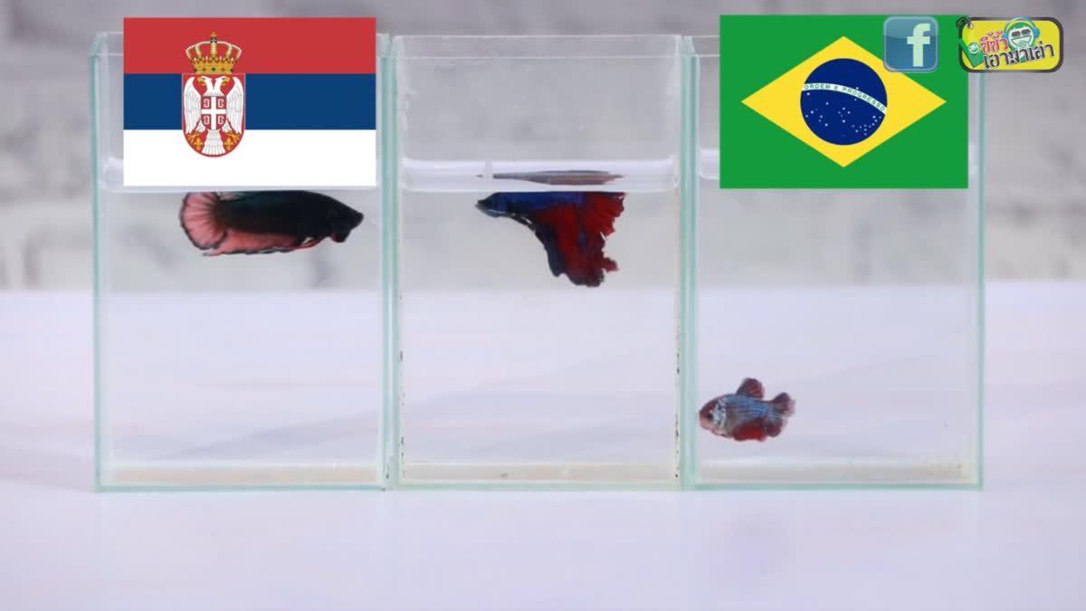 ซี้ซั้วเอามาเล่า ฟันธง ฟุตบอลโลก 2018 EP 12