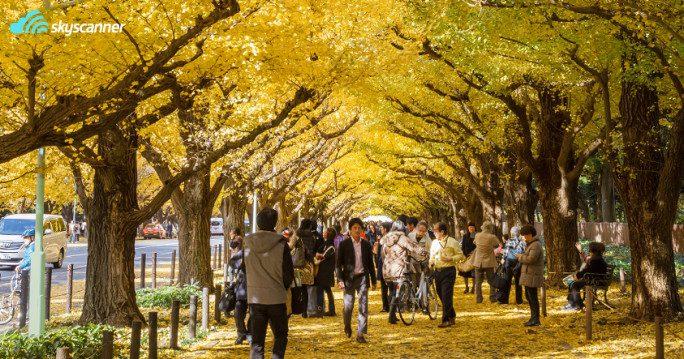 สวนเมจิยิงงู ไกเอ็ง-พระราชวังอิมพีเรียล (Meiji Jingu Gaien-Imperial Park) สถานที่ ชมใบไม้เปลี่ยนสีที่ญี่ปุ่น