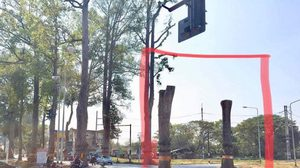 โอด! ยางนาอายุกว่าร้อยปี ถนนเชียงใหม่-ลำพูน ถูกตัดเหลือแต่ตอ ยืนต้นตายอนาถ 2 ต้น