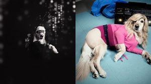 น้องหมาคอสเพลย์ แต่งเป็น Madonna ถ่ายแฟชั่นเก๋ๆ ก็อปลุคเนียนๆ