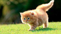 วันแมวโลก