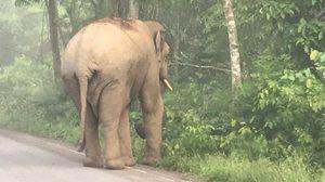 ผัว-เมียรถคว่ำตกข้างทางเจ็บ หลังพยายามขับหลบช้างป่า !!