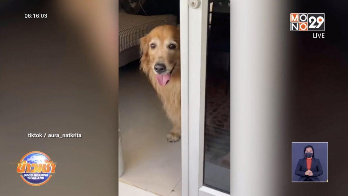 เจ้าของขอโทษ ปิดประตูลืมสุนัขไว้นอกบ้าน