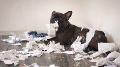 3 วิธีแก้ปัญหา หมาคุ้ยขยะ ช่วยให้บ้านเป็นระเบียบ