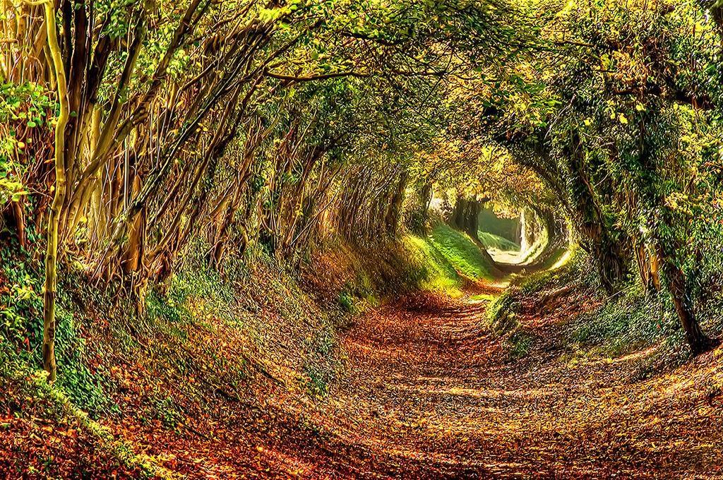 ashdown-forest-west-sussex