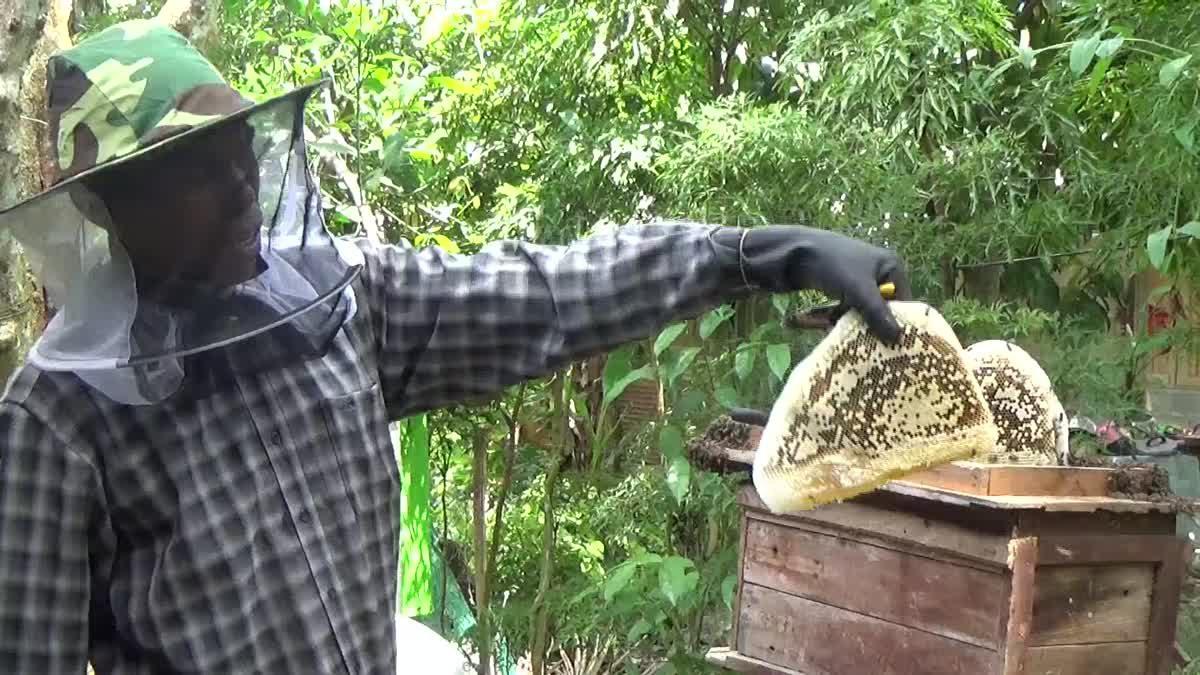 ชาวบ้านรวมตัวเลี้ยงผึ้งโพรง สร้างรายได้ปีละ 1 ล้านบาท