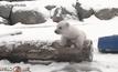 ลูกหมีขาวเห็นหิมะเป็นครั้งแรก