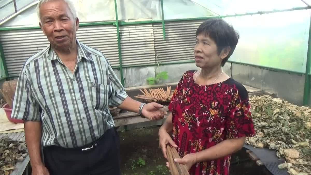 ชายวัย 76 ปี สืบทอดภูมิปัญญาสมุนไพรไทยกว่า 40 ปี หนึ่งเดียวพะเยา