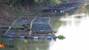 ชัยนาทแล้งหนัก ผู้เลี้ยงปลากระชังหยุดกิจการ 200 ราย