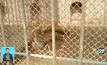 เสือทำร้ายนักท่องเที่ยวดับในจีน