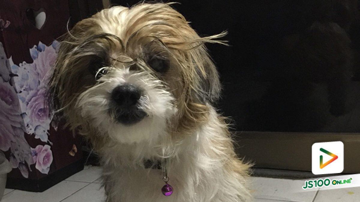 คลิป สุนัขดีใจ หลังจากพลัดหลง และมีผู้ใจดีพากลับมาส่งที่บ้าน