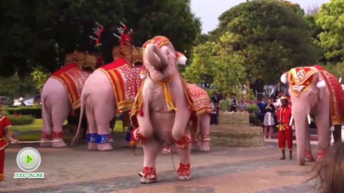 การแสดงของช้างแสนรู้ ที่งานบวงสรวง ลานเจ้าแม่จามเทวี จ.ลำพูน (12-01-61)
