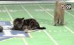 การแข่งขันซุปเปอร์โบวล์แมวจากฮอลมาร์ก สหรัฐฯ