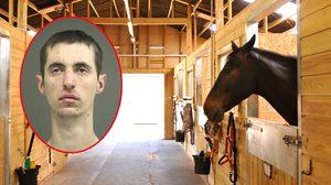 หนุ่มโรคจิตโดนข้อหาขโมยรถ และข่มขืน ม้า ถูกศาลตักสินจำคุก 20 เดือน!!