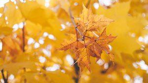 ฤดูต่างๆ ในเกาหลีใต้ มี 4 ฤดู - เรื่องน่ารู้ก่อนไปเที่ยว