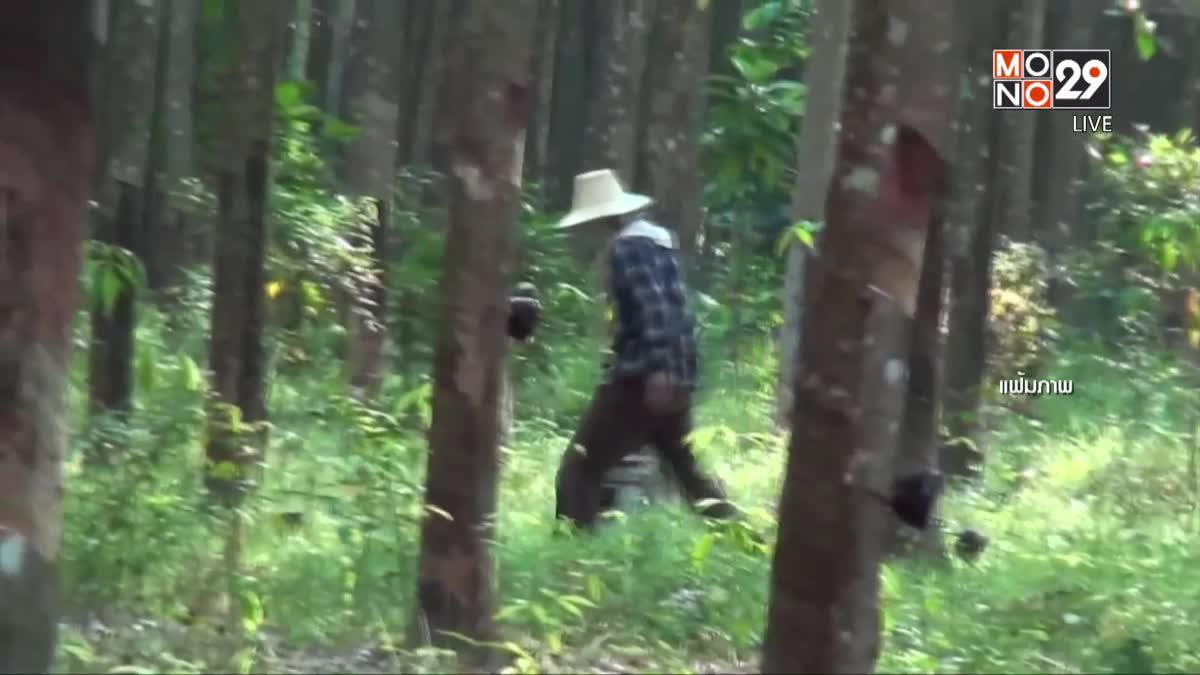 รมว.เกษตรฯ ขอชาวสวนหยุดกรีดยาง 1 เดือน