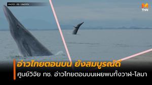 อ่าวไทยตอนบน ยังสมบูรณ์ วันนี้พบทั้งวาฬและโลมา