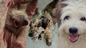 เปิดภาพหอมฟุ้ง จากหมาขี้เรื้อน สู่สุนัขน่ากอด