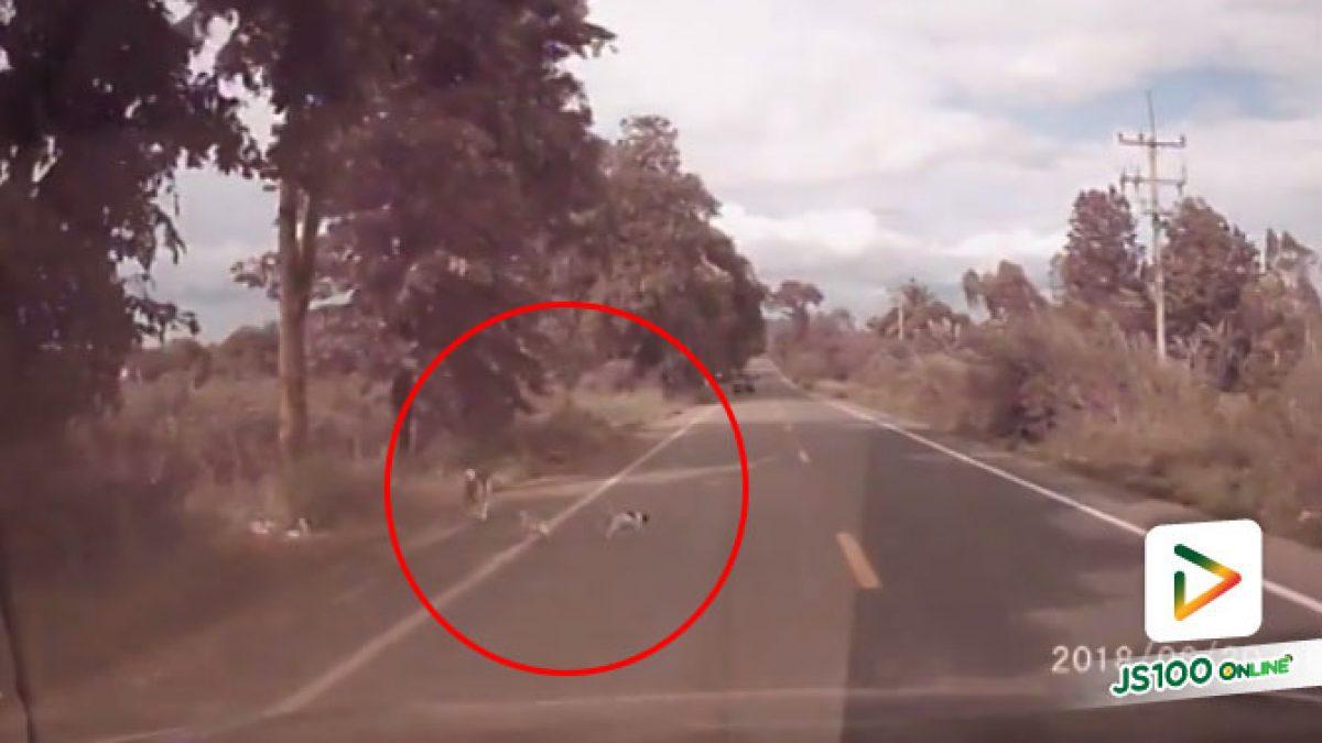 คลิปหน้องหมาวิ่งตัดหน้ารถเจ้าของคลิปจึงพากลับบ้านมาดูแลด้วย (22-06-61)