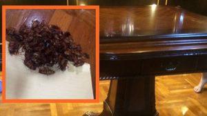 ขนลุก ! ซื้อโต๊ะไม้จากร้านเฟอร์นิเจอร์ดัง ได้แมลงสาบนับร้อยเป็นของแถม