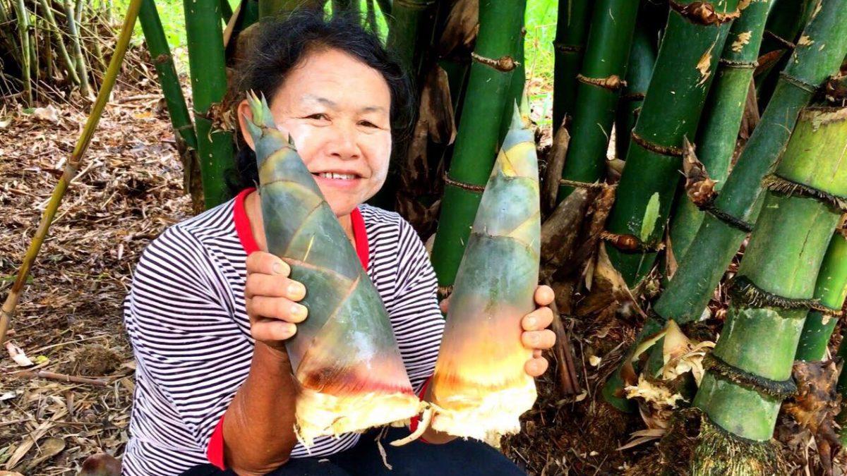 วิธีปลูกไผ่กิมซุง วิธีปลูกไผ่ตงลืมแล้ง : How to grow Sweet Bamboo : 如何种植甜竹