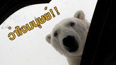 สวัสดีมนุษย์!! หมีขาว บุกเข้าไปในโรงแรม และพังข้าวของซะยับ