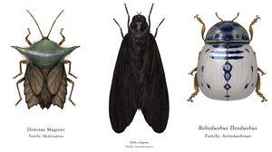 ภาพวาด แมลง Star Wars จากไอเดียบรรเจิดของศิลปินหนุ่มติ่งสงครามอวกาศ