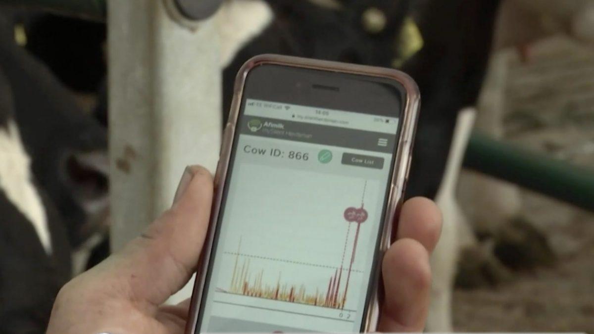 เทคโนโลยี 5G ช่วยเพิ่มผลผลิตในฟาร์มโคนม