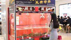 ร้านอาหารในจีนติดตั้ง ตู้คีบ กุ้งล็อบสเตอร์ ถ้าจับได้…พร้อมปรุงอาหารให้ฟรี!!