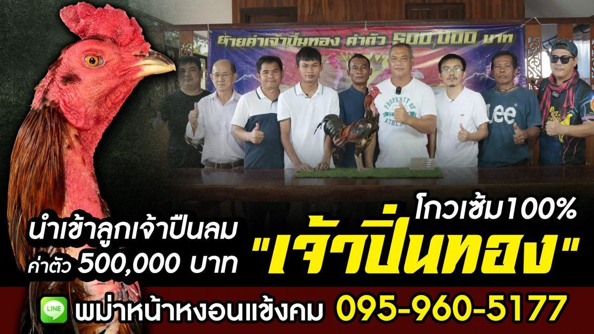 เจ้าปิ่นทอง พม่าหน้าหงอนแข้งคม สระบุรี 095-960-5177