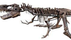 เอาจริงดิ!! ประกาศขายโครงกระดูก ไดโนเสาร์ มูลค่า 80 ล้านบาท!