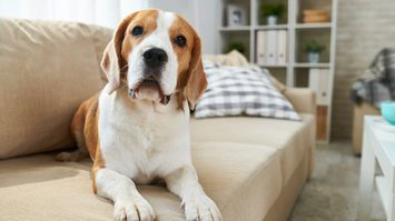 3 สิ่งที่ควรเตรียมให้พร้อมสำหรับใครที่จะนำ สัตว์เลี้ยง มาดูแลในบ้าน