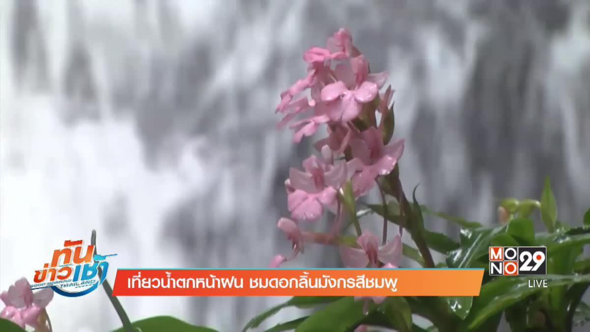 เที่ยวน้ำตกหน้าฝน ชมดอกลิ้นมังกรสีชมพู
