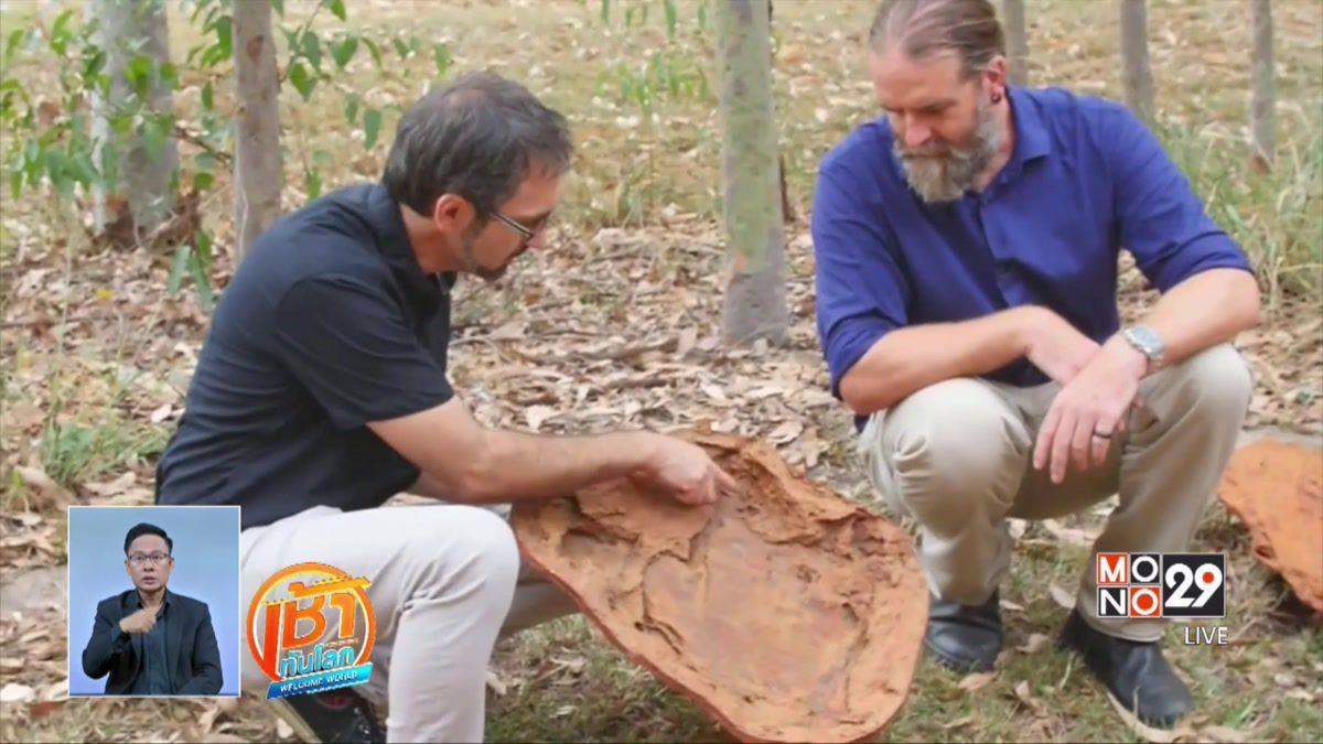 นักวิทย์อาจค้นพบรอยเท้าไดโนเสาร์ใหญ่ที่สุดในโลก