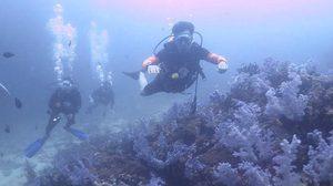กรมอุทยานฯ ยันไม่มีจริง ระเบิดกองหินริเชลิว จุดดำน้ำระดับโลกในไทย