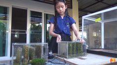 สุดทึ่ง!! 'น้องยินดี' เด็ก ป.3 ใช้มอสเปลี่ยนฝุ่น PM2.5 เป็นออกซิเจนในบ้าน