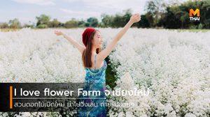 I love flower Farm จ.เชียงใหม่ สวนดอกไม้เปิดใหม่ น่าไปวิ่งเล่น ถ่ายรูปสวยๆ