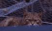 โครงการอนุรักษ์แมวป่าสก็อตแลนด์