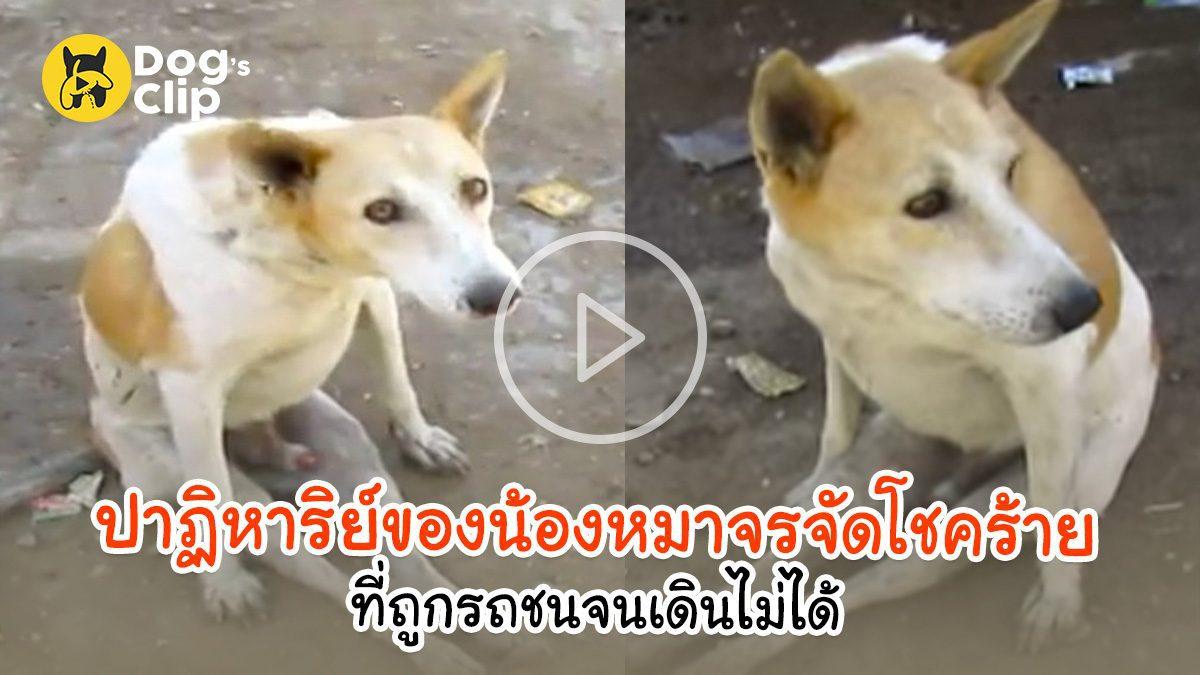 ปาฏิหาริย์ของน้องหมาจรจัดโชคร้ายที่ถูกรถชนจนเดินไม่ได้ | Dog's Clip