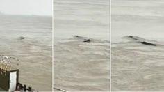ไขปริศนา สัตว์ประหลาด คล้ายเนสซีในเเม่น้ำแยงซี จีน ที่เเท้คือ…