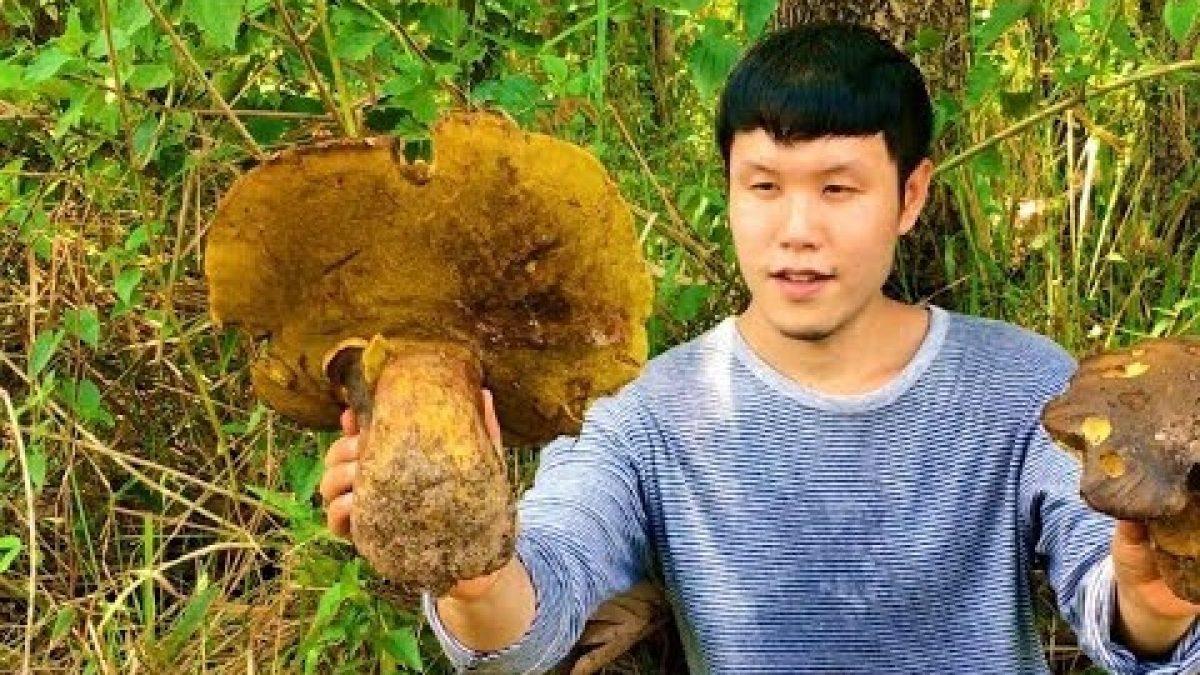 ใช้ชีวิตในป่ากับสราวุฒิ : เห็ดตับเต่า เห็ดหอม (Find King bolete mushroom / 寻找野生蘑菇)
