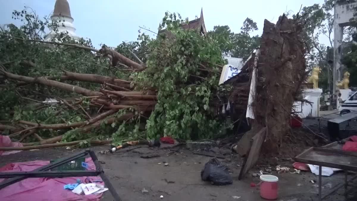 พายุถล่มเชียงใหม่ 2 อำเภอเสียหายหนัก ต้นโพธิ์ยักษ์โค่น บ้านพังกว่า 100 หลัง