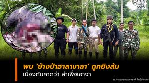 จนท.พบช้างป่าฮาลาบาลา ถูกยิงล้ม คาดตัดเอางา