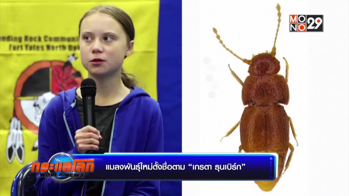 """แมลงพันธุ์ใหม่ตั้งชื่อตาม """"เกรตา ธุนเบิร์ก"""""""