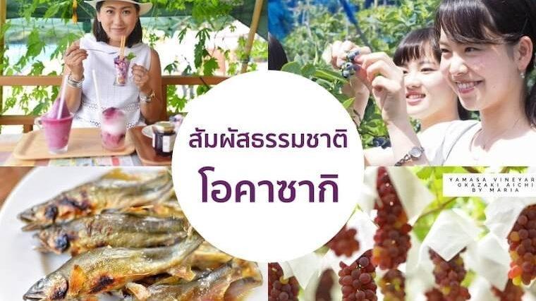 เก็บบลูเบอร์รี่ ชิมองุ่น จับปลา สัมผัสธรรมชาติที่โอคาซากิ ใกล้นาโกย่านิดเดียว
