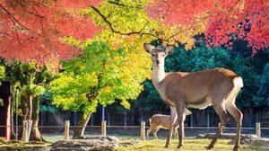 7 ข้อควรรู้ก่อน ขับรถเที่ยวญี่ปุ่น สนุกได้ปลอดภัยด้วย