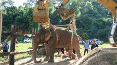 ช้างป่าจมน้ำที่พิษณุโลก ถูกส่งถึงลำปางแล้ว ขณะที่อาการยังทรง ติดตามใกล้ชิด